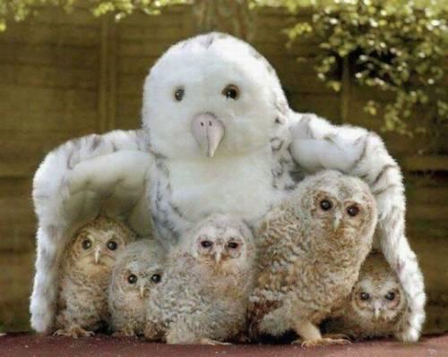 寝る前に見ると良い夢が見れる?可愛い動物たちの写真