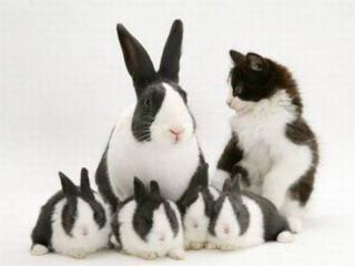 隠れるのが上手すぎる可愛い動物の画像