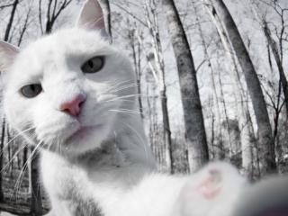 可愛い猫たちが自分撮りしてるみたいな写真