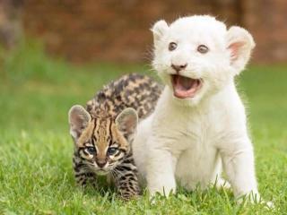 動物たちの本当に可愛らしい写真