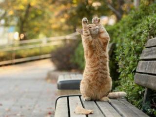 可愛い動物たちが立ちあがっている写真
