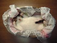 マジで可愛すぎる癒される猫の画像