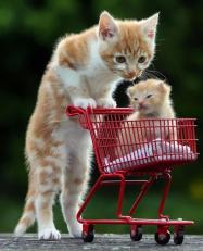 癒される動物の親子画像