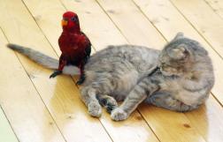 仲が良すぎる動物たちの写真