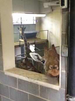 気になってしかたがない動物たちの写真