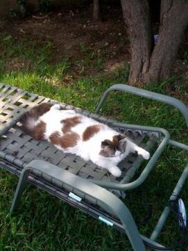 暑い夏を満喫しながら昼寝をしてるかわいい猫たち