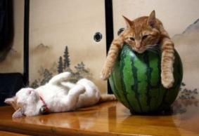 猫がウトウトしている写真が可愛すぎる写真