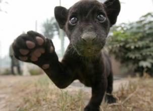 思わず笑いが出る可愛い動物画像
