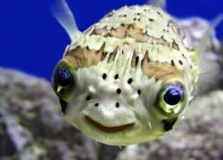 君たちに会いたがっている可愛い動物の写真