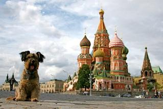 世界を旅した雑種犬、オスカー 写真