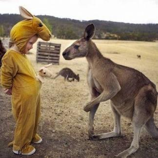 見れば見るほどそっくりな動物たちの写真