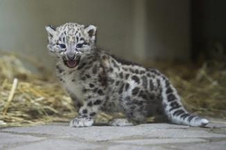 可愛すぎる動物の赤ちゃん画像28枚