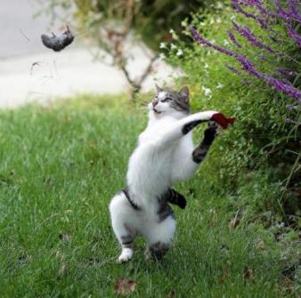 タイミング良く撮影された可愛い猫の画像