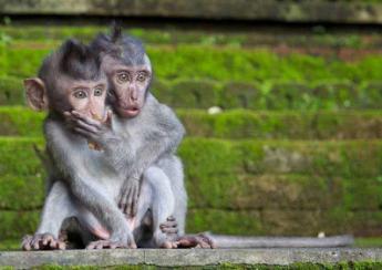 驚きを隠せない動物たちの写真