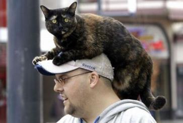 頭の上に猫を乗せてみた人々の写真