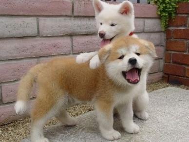 動物たちが本当に可愛すぎる写真