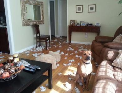 犬や猫たちの困ったいたずら写真