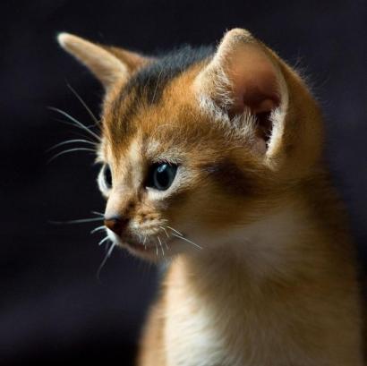 ネコ派は悶絶必至の可愛い子猫の写真