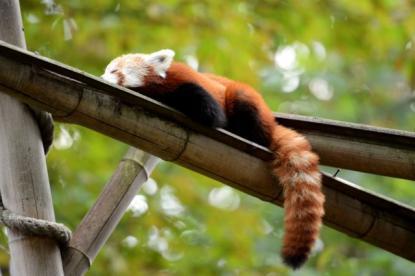 可愛すぎる動物の写真