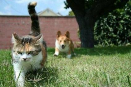 「ちょっと飼い主!何やってんの!」と思わなくもない犬・猫たちの写真