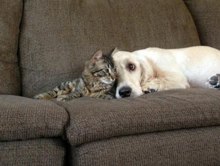 仲のよすぎる犬と猫の写真
