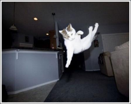 可愛い猫たちが空中飛行している写真