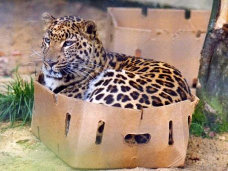 見てると幸せになれるかも!可愛い動物たちの画像