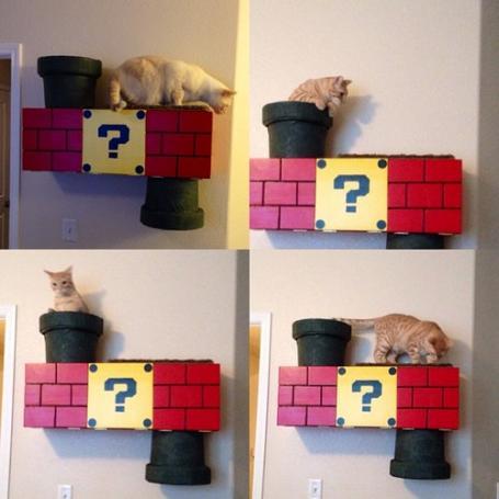 猫の遊び場をスーパーマリオにしてみたら楽しかった写真