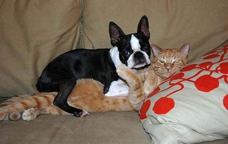 飼い主が早く帰ってきた時の猫の反応