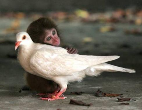 可愛い動物たちが仲良く過ごしている写真