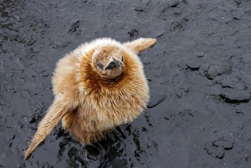なんだこのふわふわな生き物たちの写真