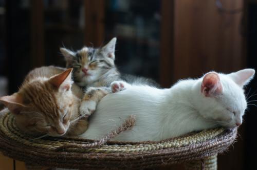 寝ている猫ちゃんたちの可愛い写真