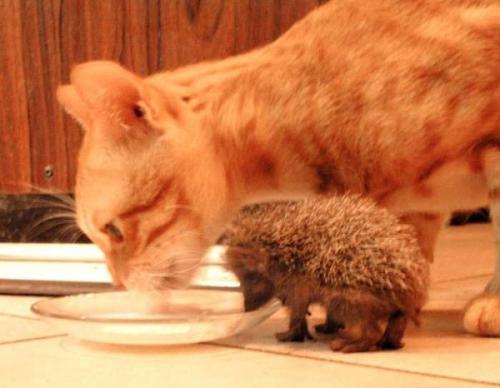 動物の可愛くて和める写真