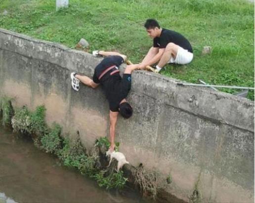 動物を助ける為に奮闘している人々の写真
