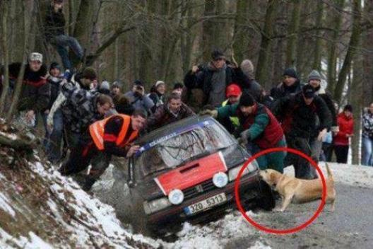 動物も人もお互いに助け合っている写真