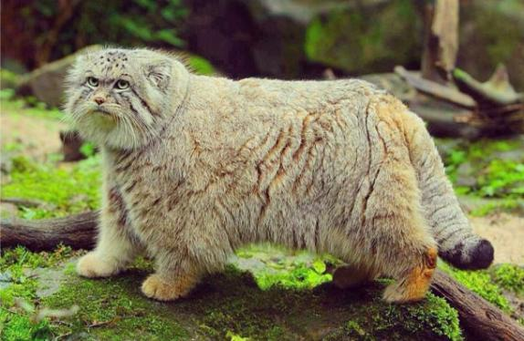 動物たちが人間の姿みたいにしている可愛い写真
