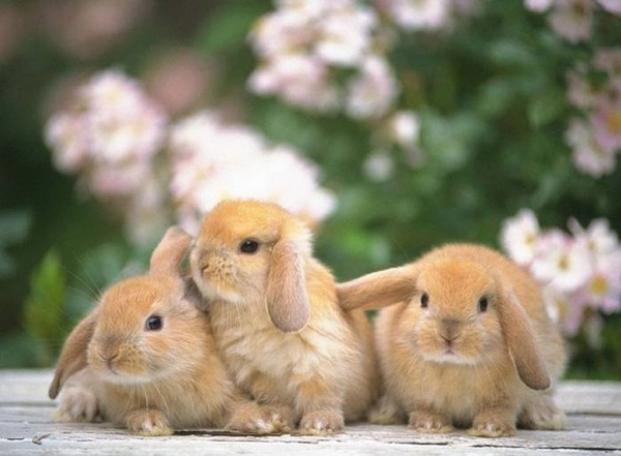 とてつもなく可愛いウサギの写真