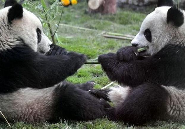 保存したくなる!可愛い動物の写真
