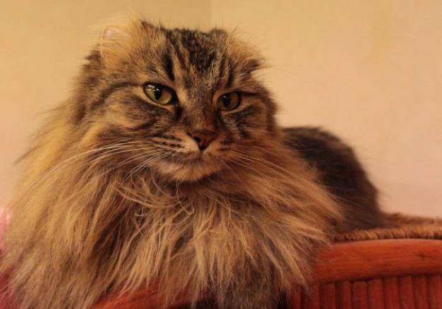 海外でも話題になってた!日本の猫カフェ様子の写真