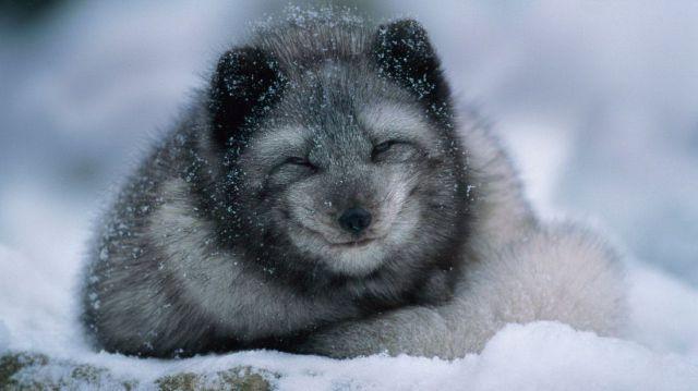 本当に可愛すぎた動物たちの赤ちゃんの写真
