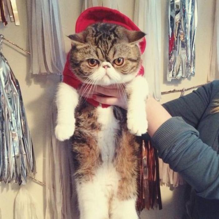 コスプレが似合いすぎる犬・猫の写真