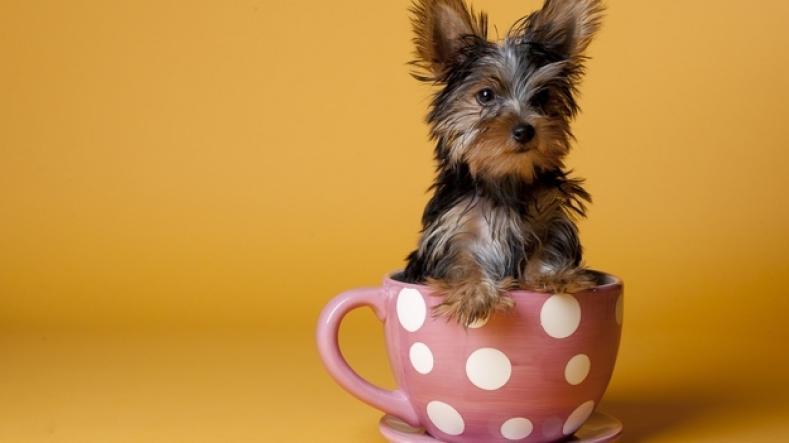 カップに収まるほど小さい犬が可愛い写真