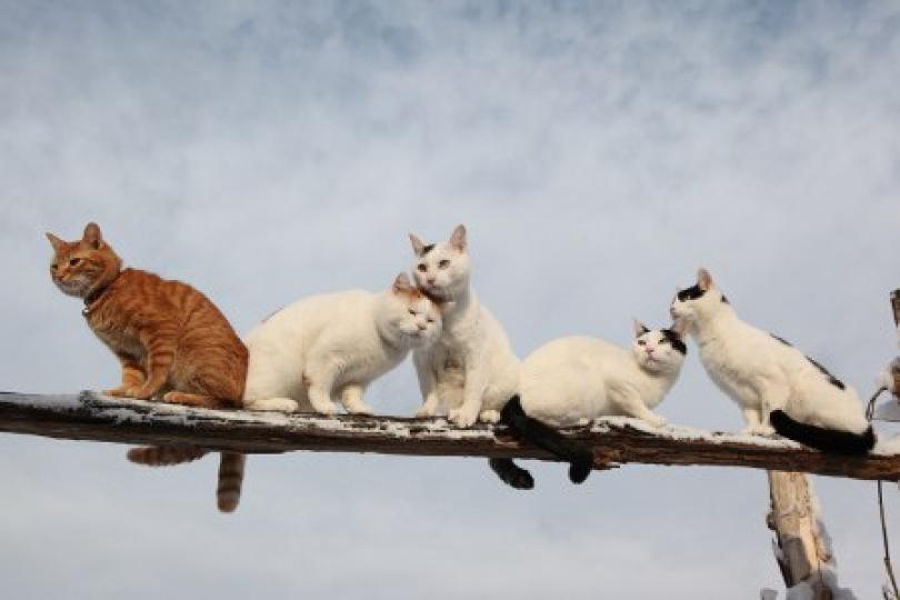 やっぱり可愛い猫の画像