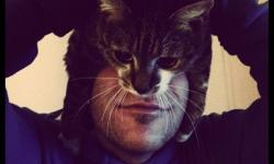 猫を仮面にしてみた面白い写真