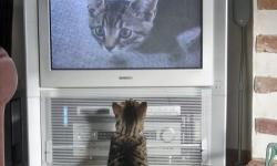 動物たちが秘密を見られてカメラに反応してる写真