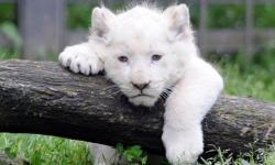 とてもキュートで可愛い動物の写真