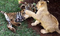 とりあえず癒される可愛い動物の写真