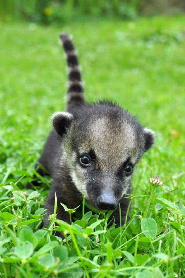 かわいすぎる動物たちの画像可愛すぎる動物の赤ちゃん画像28枚